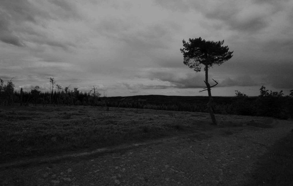Einsamer Baum am Kahlen Asten
