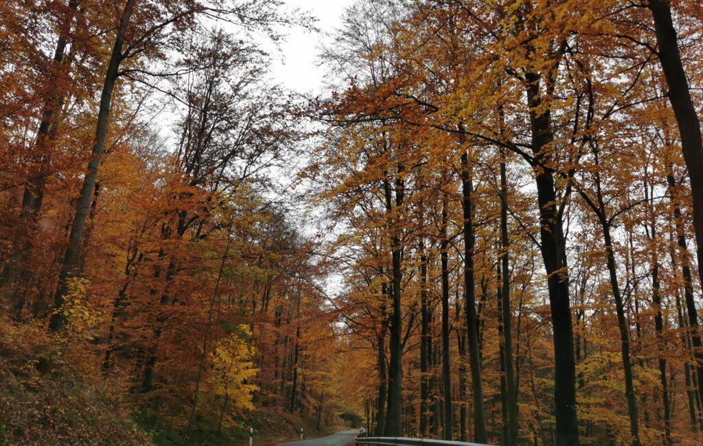 Alles gelb im Herbst